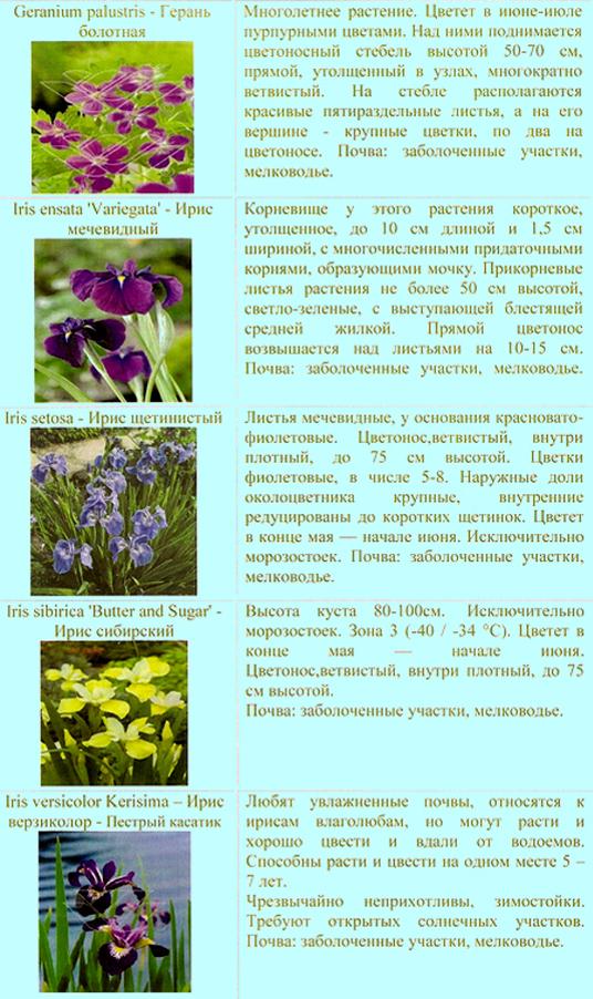 prud_rastenia_02