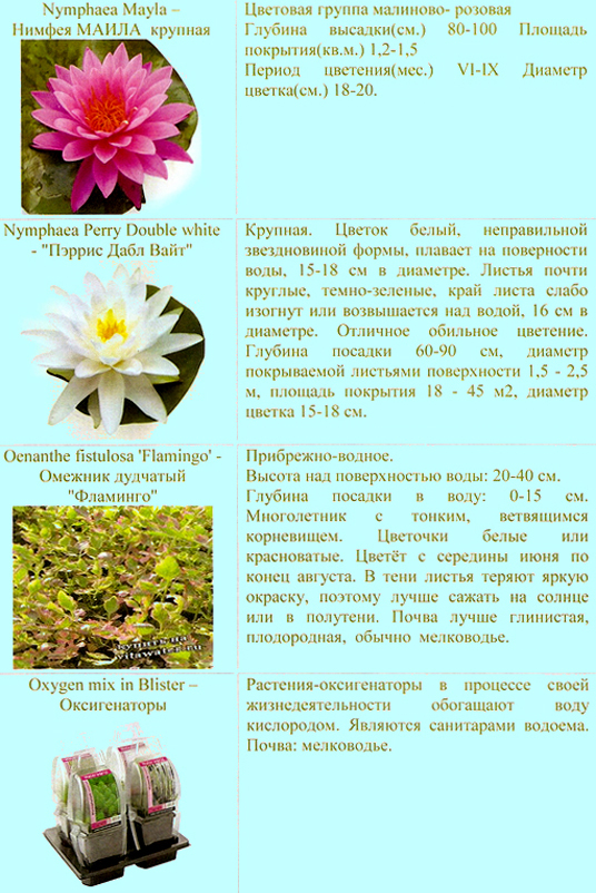 prud_rastenia_05